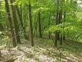 Nationalpark Eifel -13- samsung s7 camera.jpg