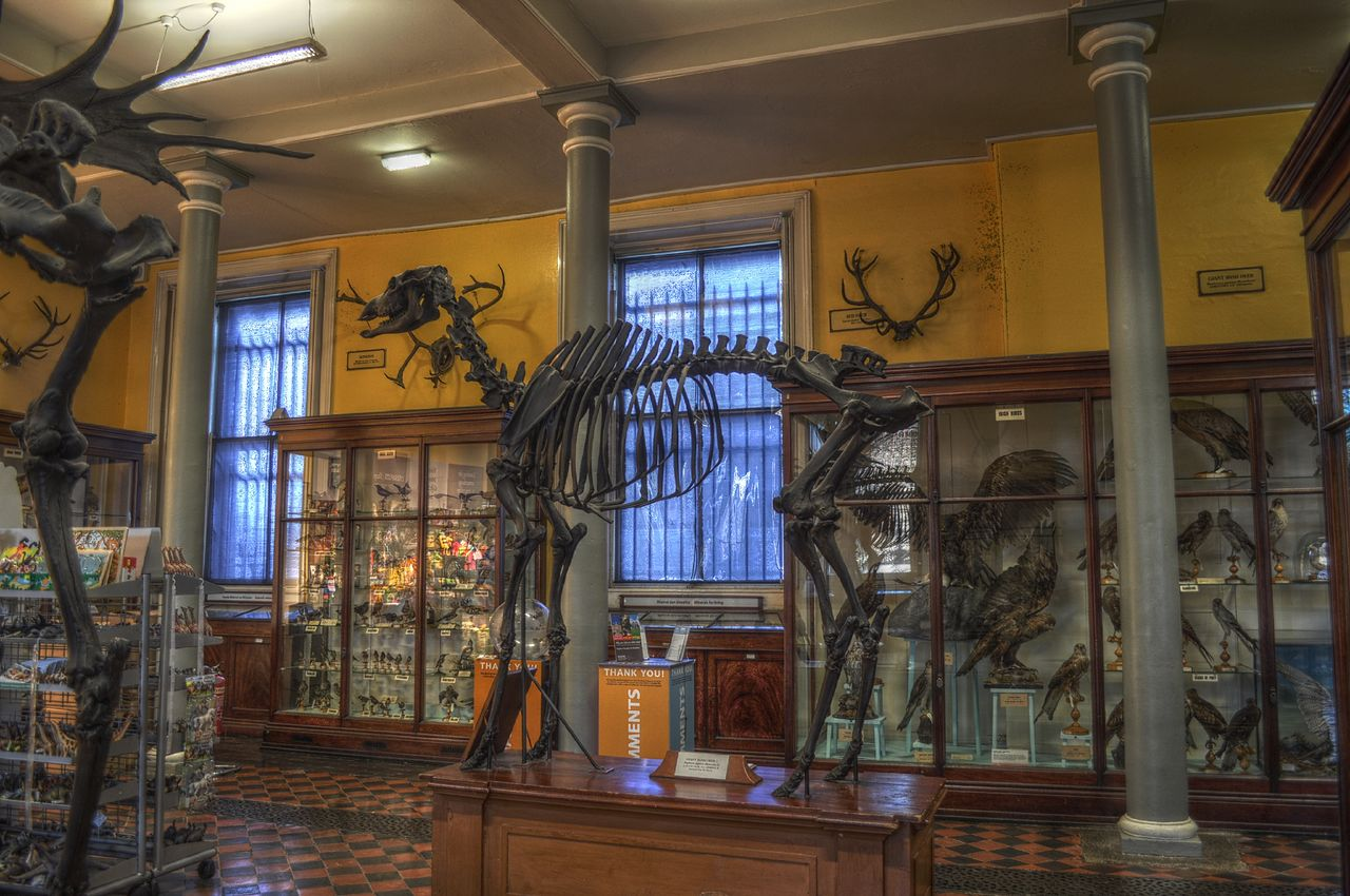 Natural History Museum Dublin Location