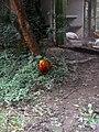 Nature 0190628-WA0112.jpg