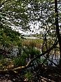 Naturschutzgebiet Craimoosweiher 04.jpg
