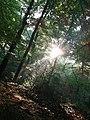 Naturschutzgebiet Rumbachtal in Mülheim an der Ruhr.jpg