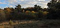 Naturschutzgebiet Seester Feld 02.JPG