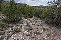 Near Bent - Flickr - aspidoscelis (1).jpg