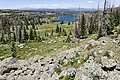 Near Red Lake - Flickr - aspidoscelis.jpg