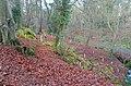 New planting, Crawfordsburn Glen - geograph.org.uk - 655187.jpg