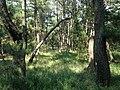 Niji Pine Grove 1.jpg
