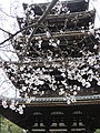 Ninna-ji National Treasure World heritage Kyoto 国宝・世界遺産 仁和寺 京都44.JPG
