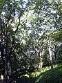 Niska Banja - panoramio - tromi (11).jpg