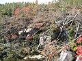 North Fork - panoramio (3).jpg
