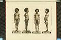 Nova Guinea - Vol 3 - Plate 36.jpg