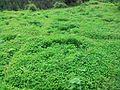 Nursery12, Shimla.jpg