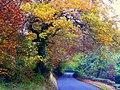 Oak and beech colour - geograph.org.uk - 1034773.jpg