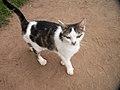 Oaklawn Farm Zoo, May 16 2009 (3539703960).jpg