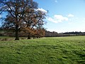 Oaks on the Way - geograph.org.uk - 1607533.jpg