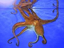 Rêver de pieuvre dans PIEUVRE