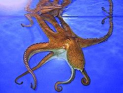 Blæksprutte blæksprutter