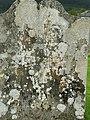 Old gravestone, St Brides graveyard - geograph.org.uk - 913421.jpg
