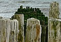 Old sea defences at Dawlish Warren - geograph.org.uk - 1283095.jpg