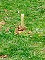 Om-archist burial.jpg