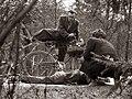 Operacija Tovarištvo - preizkus ali pomagajo šoferji ponesrečencem na cesti v Mariboru 1958.jpg