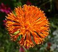 Orange Orb (7826522894) (2).jpg