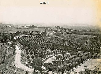 Kurrajong, New South Wales - Historical photograph of local citrus orchards from Records Authority of New South Wales