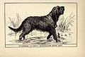 Otterhound BDL.jpg