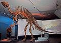 Ouranosaurus nigeriensis, ROM.jpg