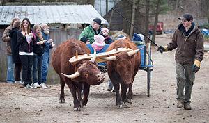 Gorham, Maine - Ox cart at Merrifield Farm