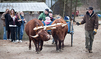 Gorham, Maine - Ox cart at Merrifield Farm