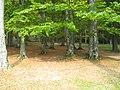 Pădure la ieşire din Buşteni - panoramio.jpg