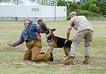 PMO K-9 unit conducts bite training 150415-M-TH981-005.jpg