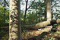 PM 112972 B Koppenberg.jpg