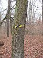 PP Černý orel, páska na stromě.jpg