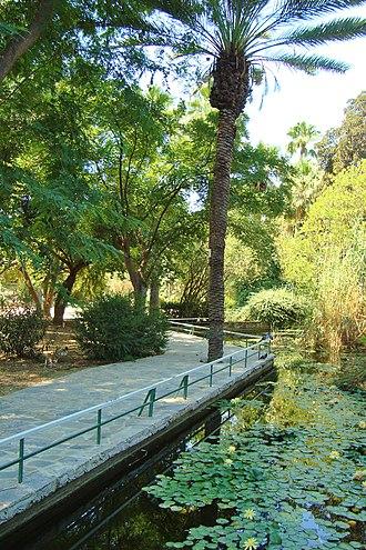 Nicosia municipal gardens - Image: Palm trees and lake in Nicosia historical Municipal gardens in Republic of Cyprus
