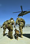 Pararescueman train with Army, military canines (9239579831).jpg