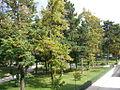 Parks Peja.jpg