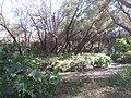 Parque Undido, Saltillo Coahuila - panoramio (9).jpg