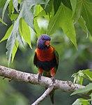 Parrot (31132560081).jpg