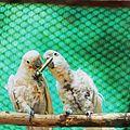 Parrot sharing their food.jpg