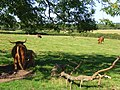 Pasture, Brightwalton - geograph.org.uk - 893442.jpg