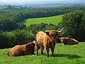 Pasture, West Knoyle - geograph.org.uk - 975395.jpg