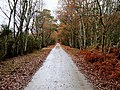 Path autumn skipwith common nature reserve woods 2.jpg