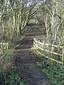 Path in Colwick Country Park - geograph.org.uk - 652798.jpg