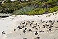 Penguins at Boulders Beach, Cape Town (17).jpg