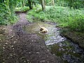 Permissive path in South Hill Copse - geograph.org.uk - 887569.jpg