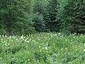 Permskiy r-n, Permskiy kray, Russia - panoramio (1162).jpg