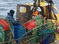 Pesca de centolla en la Bahía Ushuaia 23.JPG