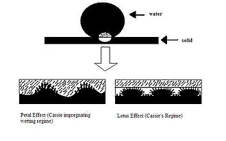 "Wetting - Figure 9: ""Petal effect"" vs. ""lotus effect"""