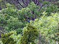 Petit Jean State Park 010.jpg